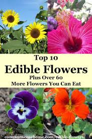 flowers edible top 10 edible flowers plus 60 more flowers you can eat