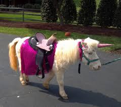 a short history of unicorns