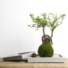 aliexpress com buy square shaped silicone concrete planter