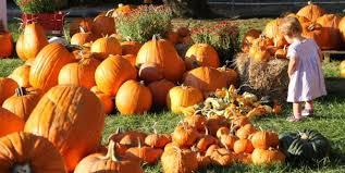 pumpkin patch maternity best nyc pumpkin patches