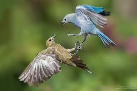 birds in flight kester clarke wildlife photography