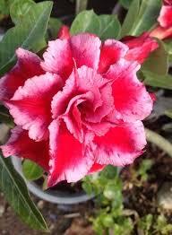 7115 best flowers u0026 plants images on pinterest flowers plants