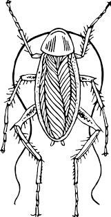 32 cockroach tattoo drawings images tattoo
