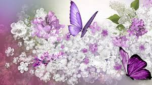 lilac flowers free lilac wallpapers with 30 items