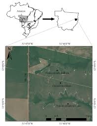 effects of soil and space on the woody species composition and