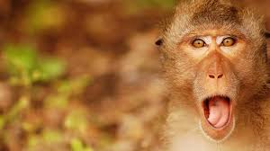 monky wallpapers group 92