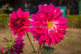 exotic flowers foliage in royalty free stock images amazing