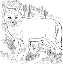 grey fox coloring page free printable coloring pages