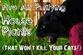 not poison in n d five air purifying house plants that won t kill your cat