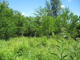plant communities environmental nature center gallery old field succession 6 meec