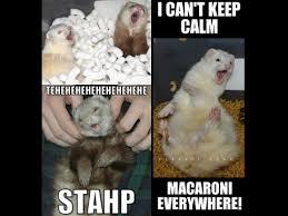 Ferret Meme - pet body language ferret youtube