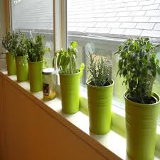 kitchen herb garden ideas amazing diy indoor garden ideas for