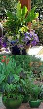 24 stunning container garden planting designs container garden