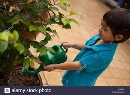 preschool aged boy watering plants at home stock photo royalty