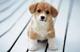 cute dogs wallpapers u2013 tabify io