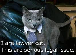 Dog Lawyer Meme - lawyer cat meme in threat to lawyer dog supremacy legal cheek
