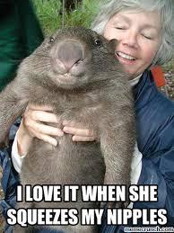 Wombat Memes - wombat