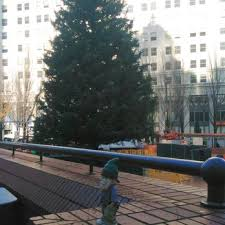 portland s pioneer courthouse square tree 27 photos