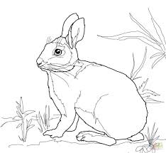 easter rabbits coloring pages rabbit kids free printable