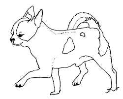 coloring pages chihuahua puppies chihuahua dog taking a step forward coloring pages netart