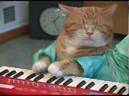 keyboard cat reincarnated youtube