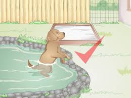 3 ways to prepare your yard for a dog wikihow