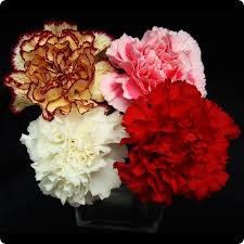 bulk carnations bulk assorted carnations 400 count wholesale carnations