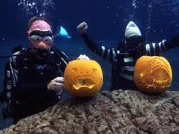 the halloween spirit florida aquarium has spooky undersea fun tbo com