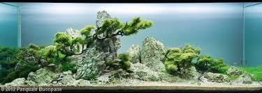 Aquascape Tree 2012 Aga Aquascaping Contest 351
