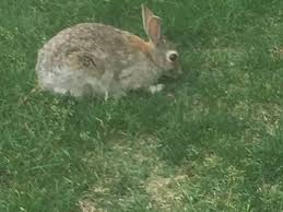 how to keep rabbits out of your yard 9news com