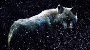 dire wolves prowled the earth around national geographic