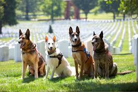 us war dog association national headquarters us war dog