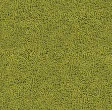 lime green shag rugs free bs peacock lime with lime green shag