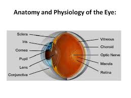 Surface Anatomy Eye Ophthalmic Preparations Definition They Are Specialized Dosage
