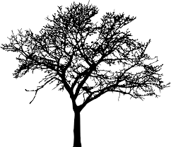 45 tree silhouettes png transparent background onlygfx com