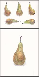 pear home decor 31 best botanical watercolor images on pinterest watercolors