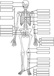Wood Joints Worksheet by Skeleton Label Worksheet With Answer Key Science Fun Pinterest