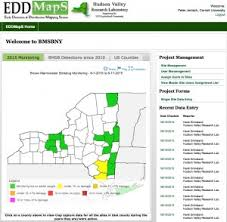 edd maps bmsb update nymphs increasing in traps found on the