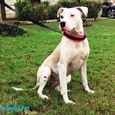 adopt a pet com home facebook