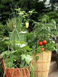 25 unique container vegetable gardening ideas on pinterest