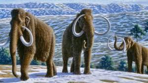 bbc future u2026 clone mammoth
