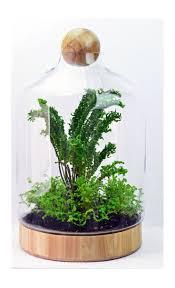 Succulent Kits by Best 25 Terrarium Kits Ideas On Pinterest Airplant Terrarium