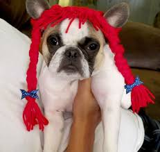 Halloween Costume Ideas Dogs 54 Diy Dog Costumes Images Animals Costumes