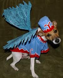 halloween costumes 1800 halloween pet contest 2008 martha stewart