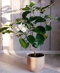 plantes dans la chambre 11 plantes vertes dans la chambre contre les troubles du sommeil