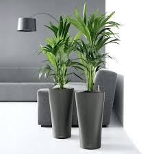 modern planters indoor u2013 affordinsurrates com