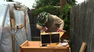 how to set up a backyard beehive youtube