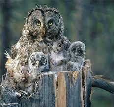 Kentucky wildlife images 31 best kentucky wildlife images wildlife kentucky jpg