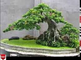 bonsai tree types images for most expensive bonsai tree in the