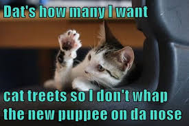 Meme Cheezburger - dat s how many i want cat treets lolcats lol cat memes